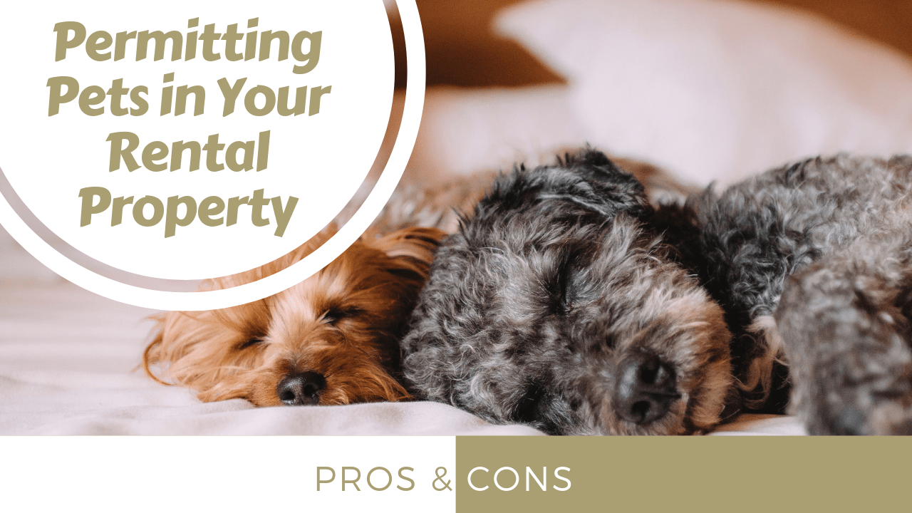 The Pros and Cons of Permitting Pets in Your Sacramento Rental Property - Article Banner